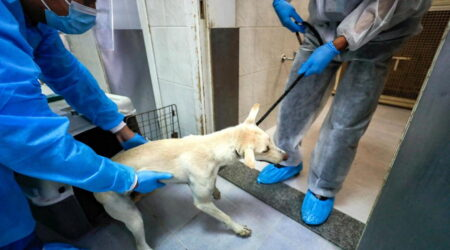 Lasciati morire di fame e sete nel deserto: la strage di cani e gatti a Dubai in vista di Expo