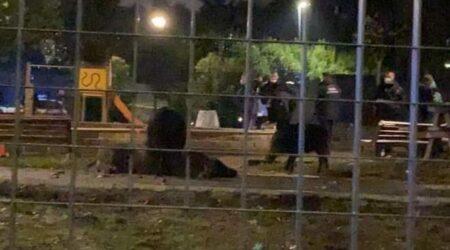 """Roma, la polizia spara a una femmina di cinghiale e ai suoi sei cuccioli rinchiusi in un parco giochi. Gli animalisti: """"Smaltiti come spazzatura"""""""