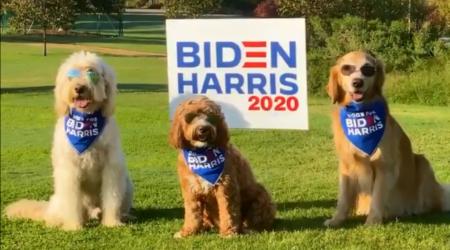 I cagnolini di Biden e la comunicazione post politica.