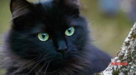 Giornata del gatto nero: perché avere un micio ci rende felici