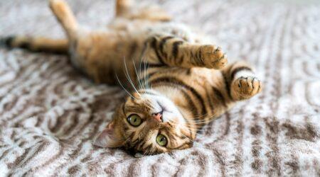Abbandonare gatto in casa: quando è reato