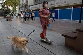 Cina, nello Yunnan vietato portare a passeggio i cani in luoghi pubblici: multe e uccisione dell'animale per chi trasgredisce