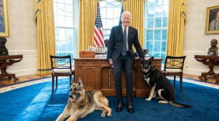 """Usa, i cani di Biden entrano nello Studio Ovale: """"Non sono in tanti ad avere questo privilegio"""""""