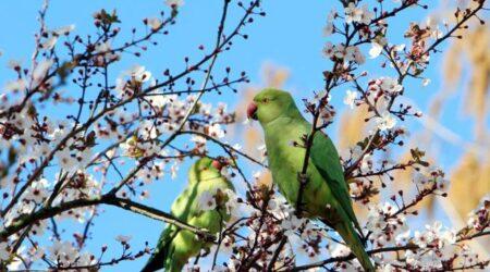 Biodiversità nei parchi urbani, arrivano cince e scoiattoli «Ma attenti ai pappagalli»