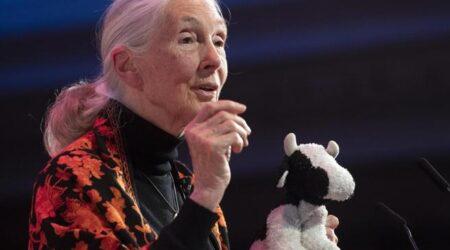 «Basta animali allevati in gabbia». Jane Goodall e altri 140 scienziati premono sulla Ue