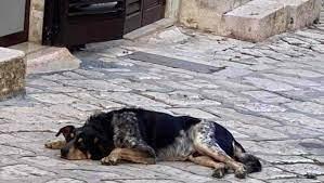 """""""Animali senza nome"""", un progetto della Federico II gliene dà uno"""