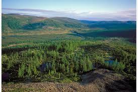 I mobili Ikea sono realizzati grazie al disboscamento illegale delle foreste siberiane