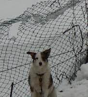 """""""Basta cani alla catena, il Piemonte si rinnovi"""", gli animalisti scrivono al presidente Cirio: """"Sono maltrattamenti"""""""